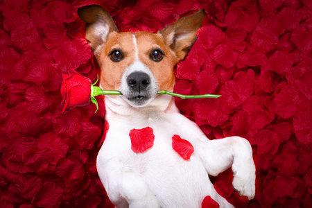 Einladung: Hund raus – kann ich das verlangen?