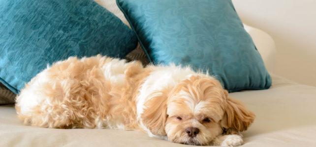 Dürfen Hunde tatsächlich in jedes Hotelbett?